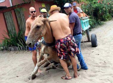 Porto Seguro: Cavalo cai e não levanta por não suportar peso de carroça